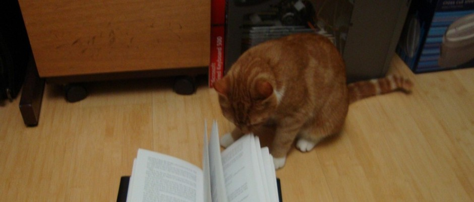 Decoder Cat is reading about GOP Talking Points and how to Decode them for the American people. Photo Credit: Cat reading book byfaeryhedgehog on flickr cc