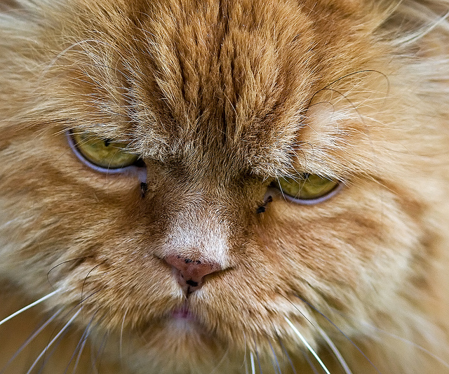 Senators Kyl and McConnell, the people have spoken in the CNN poll and 73% of Americans polled want to pass the New START Treaty now in this session of congress. Photo credit: If cats had frowns by Tomi Tapio on flickr cc