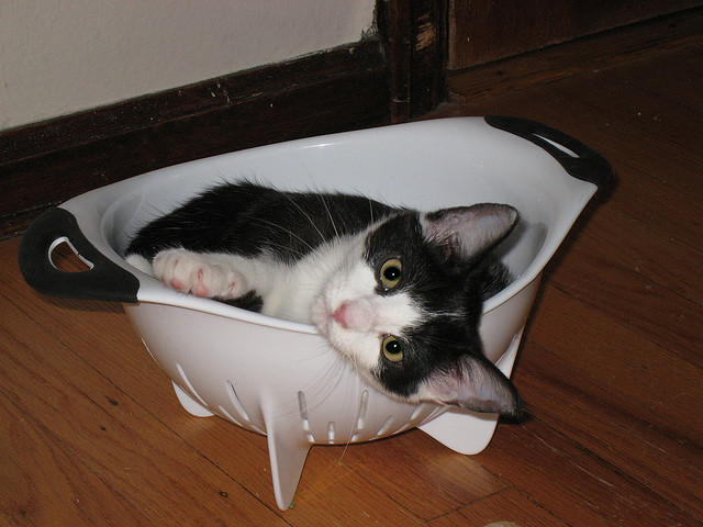 cat in strainer by i eated a cookie on fickr cc