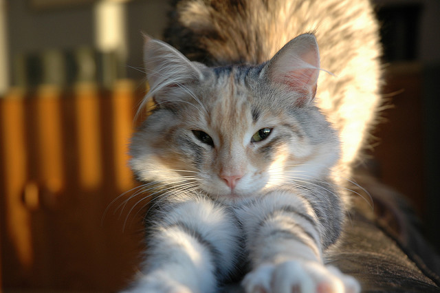 Political cat warns Americans to be wise listeners and ask more questions. Photo Credit: Good Morning Wendy by Froskeland on flickr c