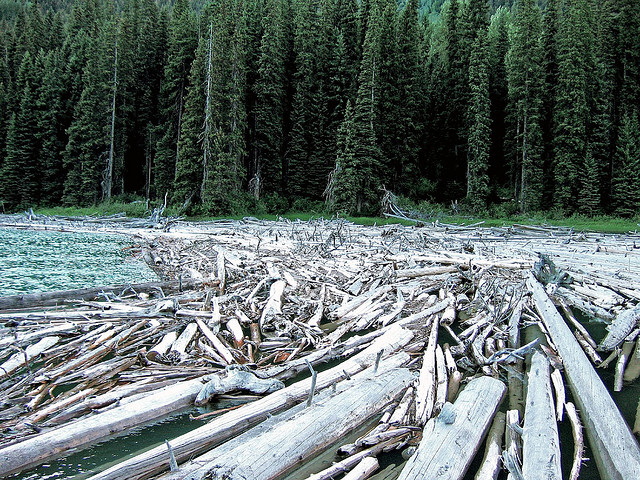 Logjam by foxtongue on flickr cc
