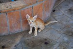 "Egyptian kitten asks, ""When will Middle East Youth get good education and good jobs?"" Photo Credit: Egyptian kitten in Dahab by plusgood on flickr cc"