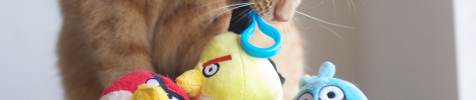 """Political Kitty warns Angry Bird Congress that they may be Voted Out in 2014 unless they pass the """"Build America's Future"""" Act and end the Sequester Now! Photo Credit: Angry Birds vs Angry Cats by MSeckington 2"""