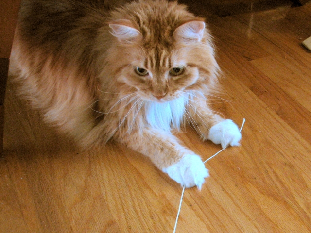 S.E.C. Cat wonders if she follows this string will it unravel the truth about the role S&P played in the 2008-2009 economic crisis? Photo credit: Cat String 7 by oskay on flickr cc