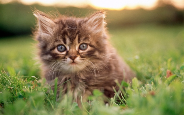 This young kitten wonders why Rick Perry took $17.4 billion in stimulus funds but declined over $500 million to help educate youth in Texas. Photo credit: Catca by panli54 on flickr cc