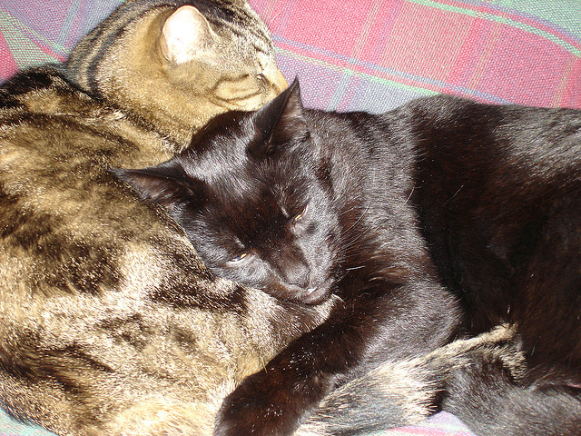 These cats get along despite their territorial natures. They want Republicans to learn from them and stop being Flabbergasted by President Obama! Work together already!  Photo Credit:  Cats by Anna's Photos on flickr cc