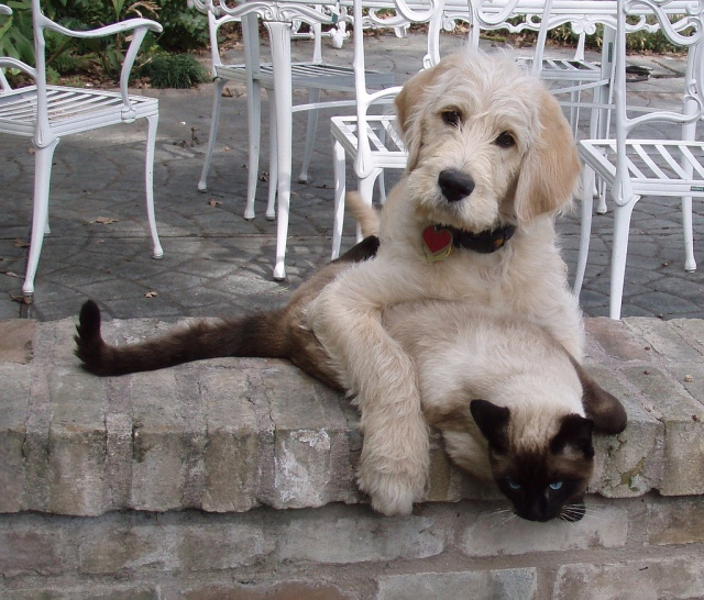 Cats and Dogs can be friends and work together. Now it is time for Republicans and Democrats to work together to put people back to work. This cat & dog want to know what Congress will do to put Americans back to work? Photo Credit: Chuy and Neko by meknits on flickr cc