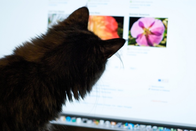 Scientific engineer cat loves learning about nature and how to protect it. Photo credit: Flury enjoying Flickr (Cat) by pmarkham cc