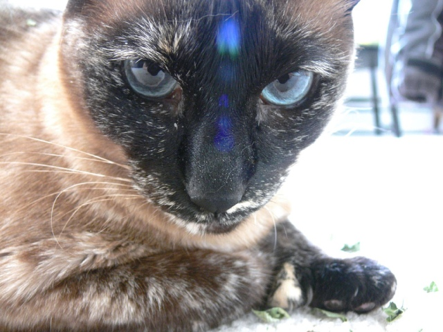 Wise Economist Cat thinks Warren Buffett is right about raising taxes on the super-rich. Photo Credit: Macro Dini and Her 3rd Blue Eye by jessicafm on flickr cc