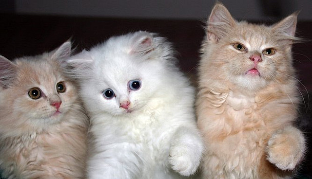 These 3 Kittens want the U.S. government to create jobs by putting people to work improving roads, schools, bridges and communities. There need to be more jobs for young graduates too. Photo Credit:  Three Musketeers by D.Meutia on flickr cc