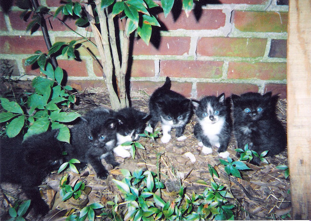 The Kittens agreed it was time for the U.S. to finally ratify the Comprehensive Nuclear Test-Ban Treaty (CTBT) for everyone on earth. Photo Credit: The Polychora at two weeks by General Wesc on flickr cc