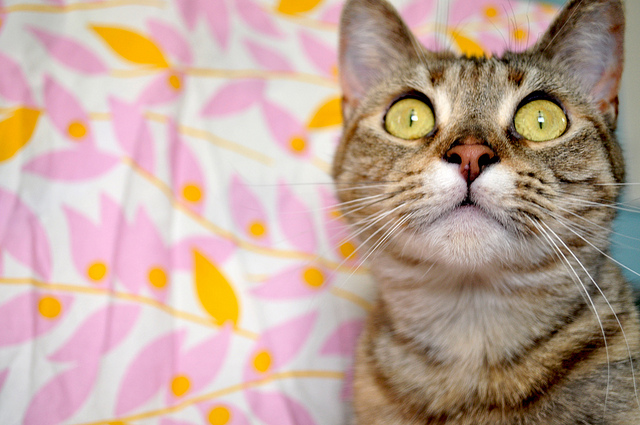 "Linguistic Cat says to call Medicare and Social Security Safety Net Programs. Enough with the ""entitlement"" jargon! Photo Credit: Untitled by gesika22 on flickr"