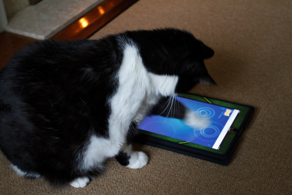 "Storm Plays ""Cat Fishing"" by Numinosity (Gary J Wood) on flickr cc"