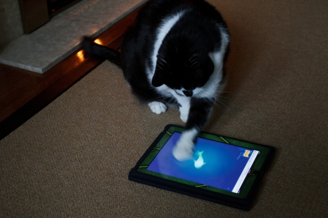 "Storm Plays ""Cat Fishing"" by Numinosity (by Gary J Wood) on flickr cc"