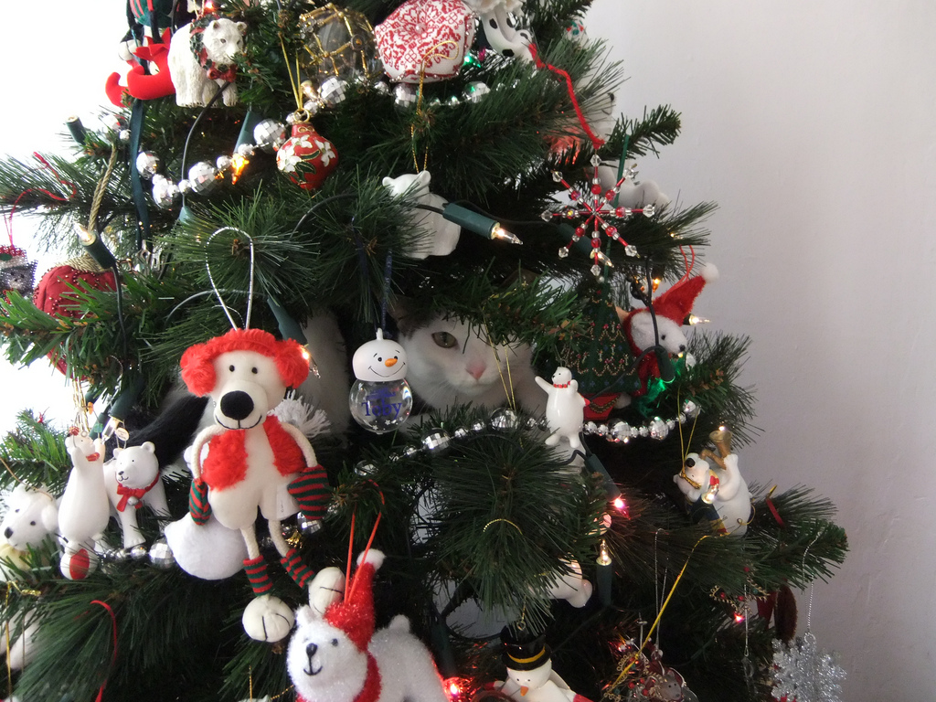Happy holidays everyone and good cheer harmony to all Christmas tree cat tower