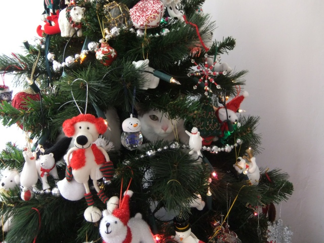 Cat in a Tree says Happy Holidays! Photo Credit: Cat in a Christmas Tree 2 by orangeaurochs on flickr cc