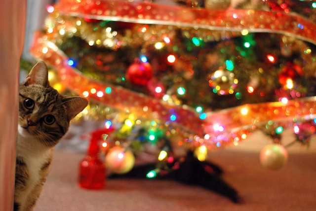 Elf Kitty says, Thanks for the pretty lights! Photo Credit: DSC_2691 by AceLain on flickr cc