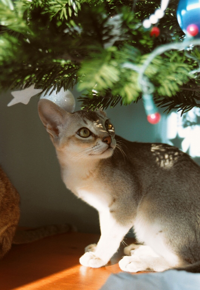 Photo Credit: Quillan under the tree by Lil Shepherd on flickr cc