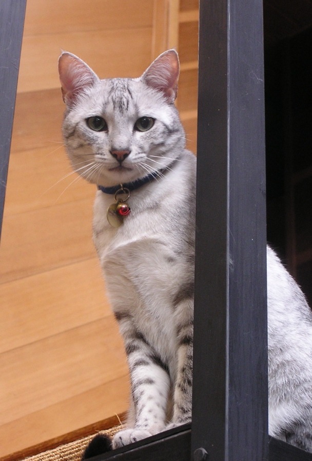 Justice Cat told AG Holder she is watching out for any Voting Rights Act Violations. Photo Credit: Watching Cat by Muffett on flickr cc