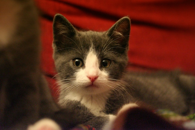 """Curious ada asks, """"President Obama when will you create a 21st Century Works Progress Admin. to put millions of people to work?"""" Photo credit: Curious ada by Eirik Newth on flickr cc"""