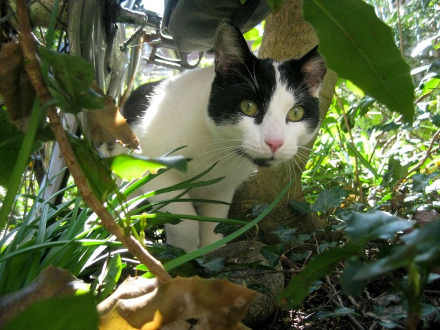 In the jungle, the might jungle by Cats in trees on flickr cc