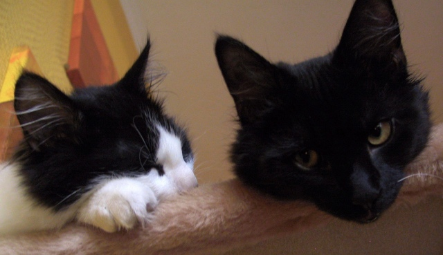 The cats have a discussion about Jacob Hacker & Paul Pierson's book Winner-Take-All Politics: How Washington Made the Rich Richer - And Turned Its Back on the Middle Class. Photo Credit: Who is the more curious cat by gerriet on flickr cc