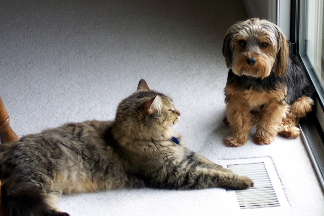 Cats and Dogs get along, so why can't Democrats and Republicans? Photo Credit: Buddy and Chubbs by ckay on flickr cc