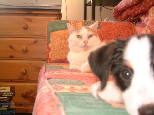 Election integrity cat and dog know that voter fraud is a great big hoax to pass horrible laws across the U.S. to suppress the vote of minorities, young people, elderly, Indpendents and Democrats. Photo Credit: JR with Jerry by elsie esq. on fickr cc