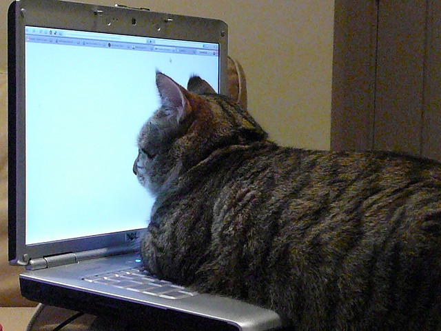 Election Protection Cat is working to protect the Ohio election by monitoring all electronic voting machines. Photo Credit: Dewey by angela n on flickr cc