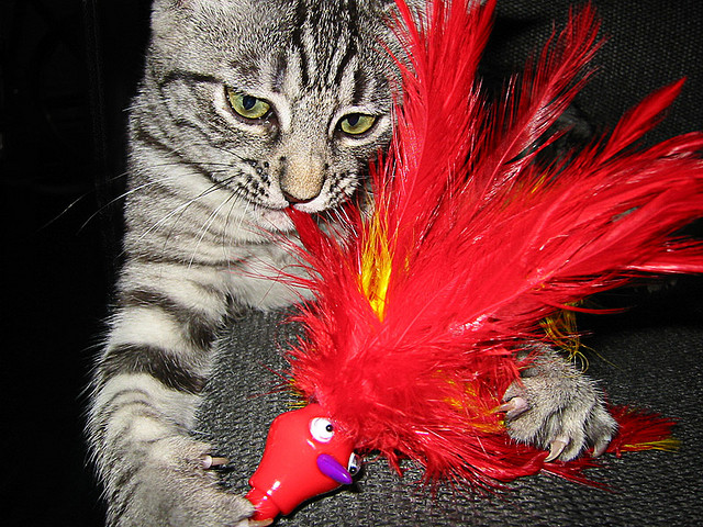 Political Cat disagreed with the misleading talkings points of the Red visitor.Photo Credit: Cat and Red Haired Toy by admiller on flickr cc
